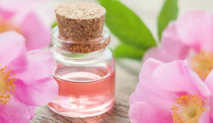Bottle of essential roses oil and pink wild rose