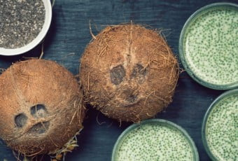 Funny Coconuts faces