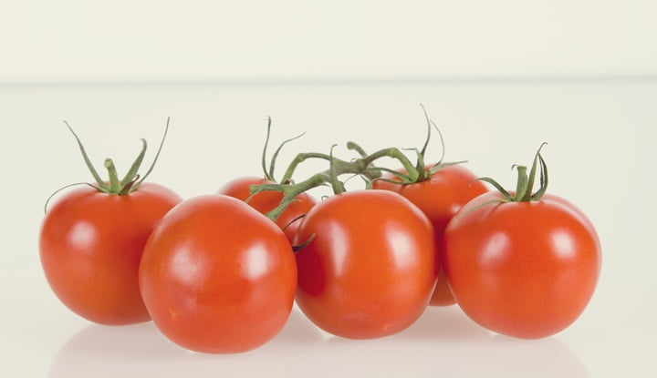 Tomatoes against white background