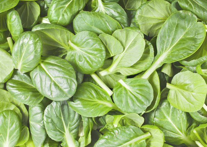 14-green-leafy-vegetables-reduce-fat-for-health-line-2
