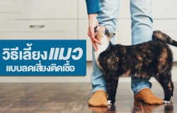 9-ways-to-reduce-the-risk-of-cats-2