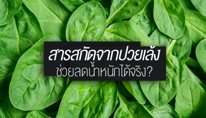 spinach-extract-may-be-an-effective-weight-loss