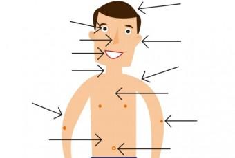 Body-Part-Worksheet