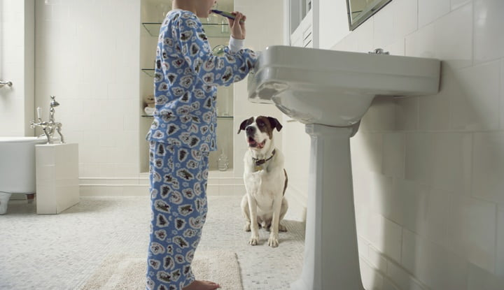 Dog watching boy (6-8) brushing teeth in bathroom