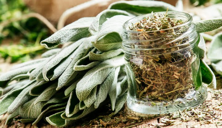 Dried sage in a glass jar, fresh sage